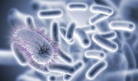 微生物和记国际平台官方网站